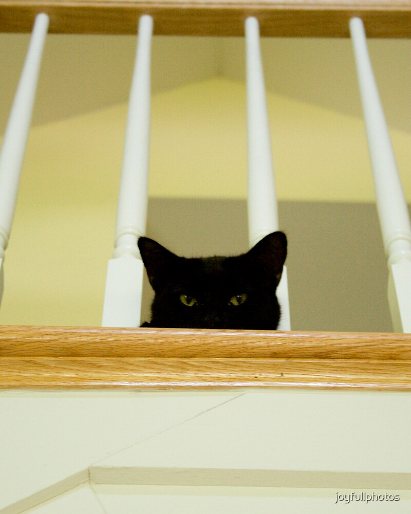 Cat's eye view by joyfullphotos