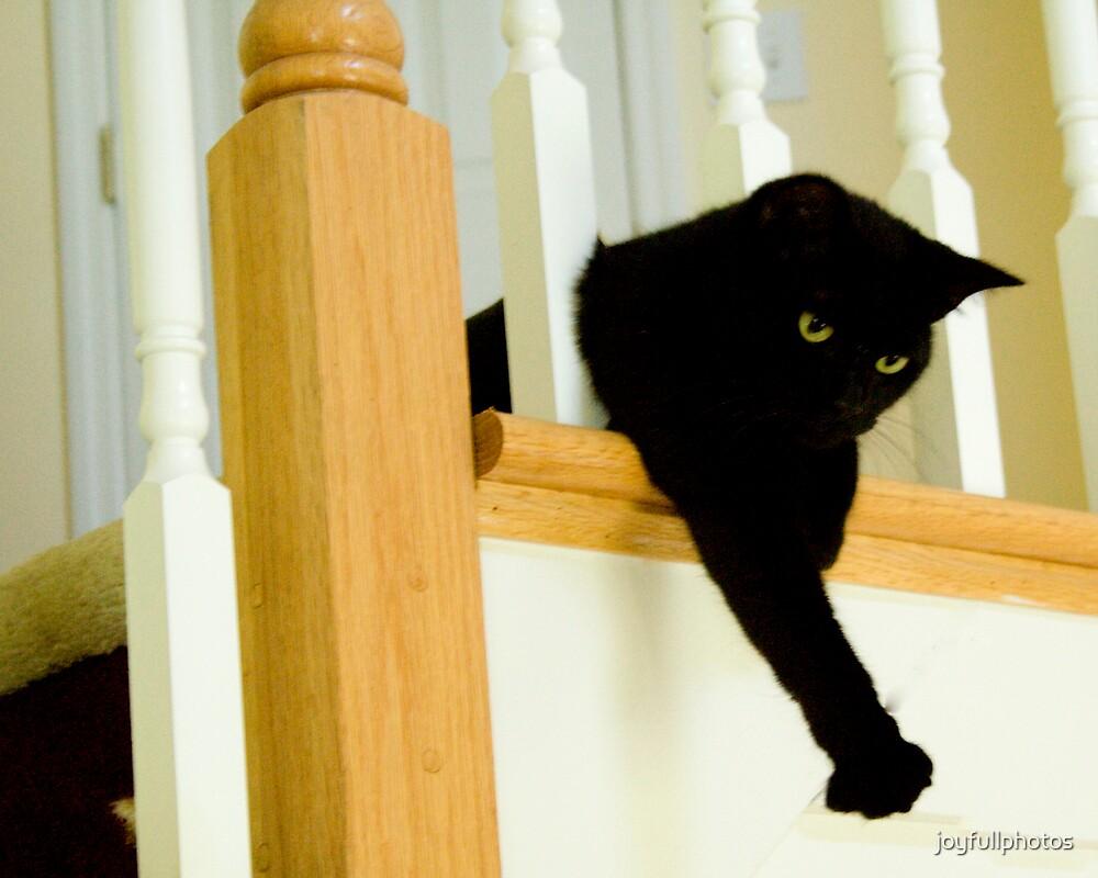 Cat games by joyfullphotos