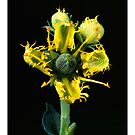 """'Ruba' from the series """"Inner Bloom"""" by Paul Cotelli"""