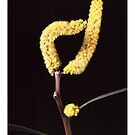 """'Wattle' from the series """"Inner Bloom"""" by Paul Cotelli"""