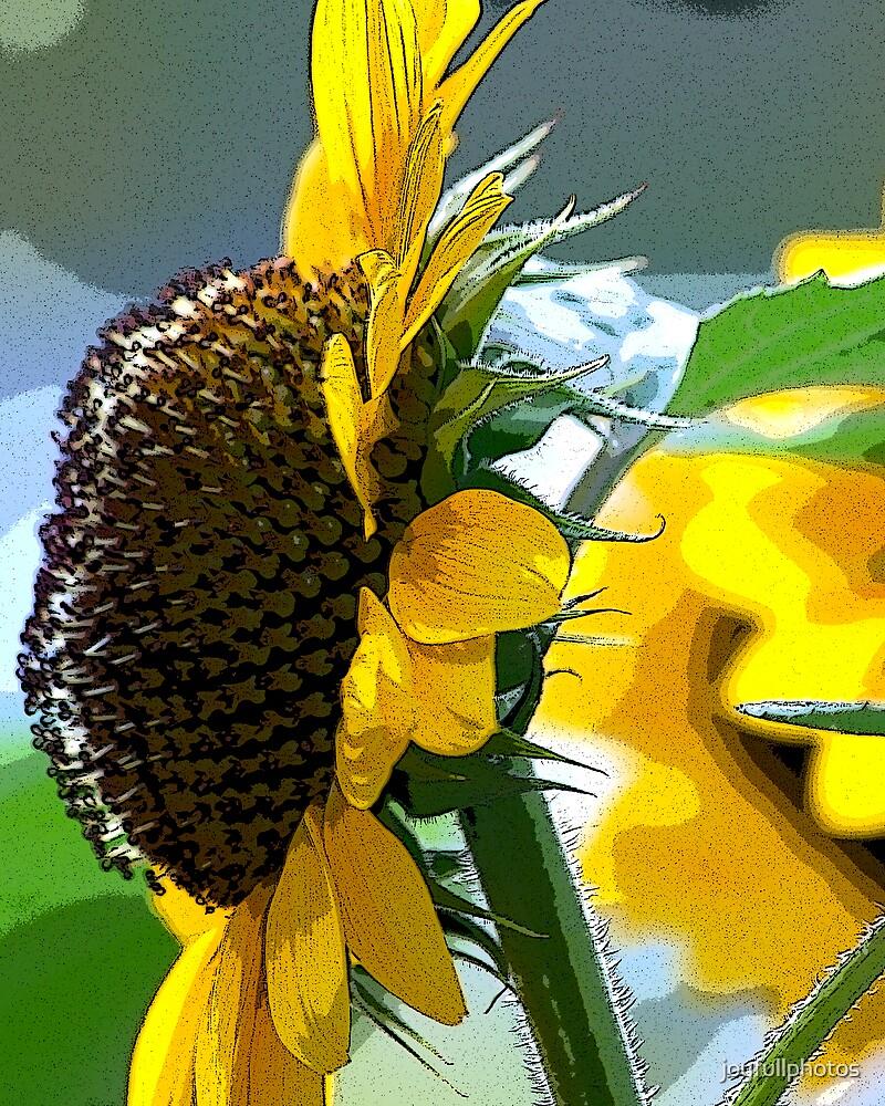 Sunflowers by joyfullphotos