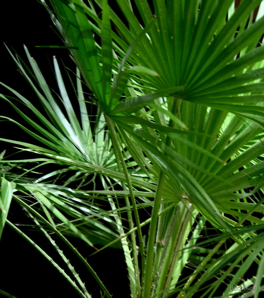 Palms by jjacobson