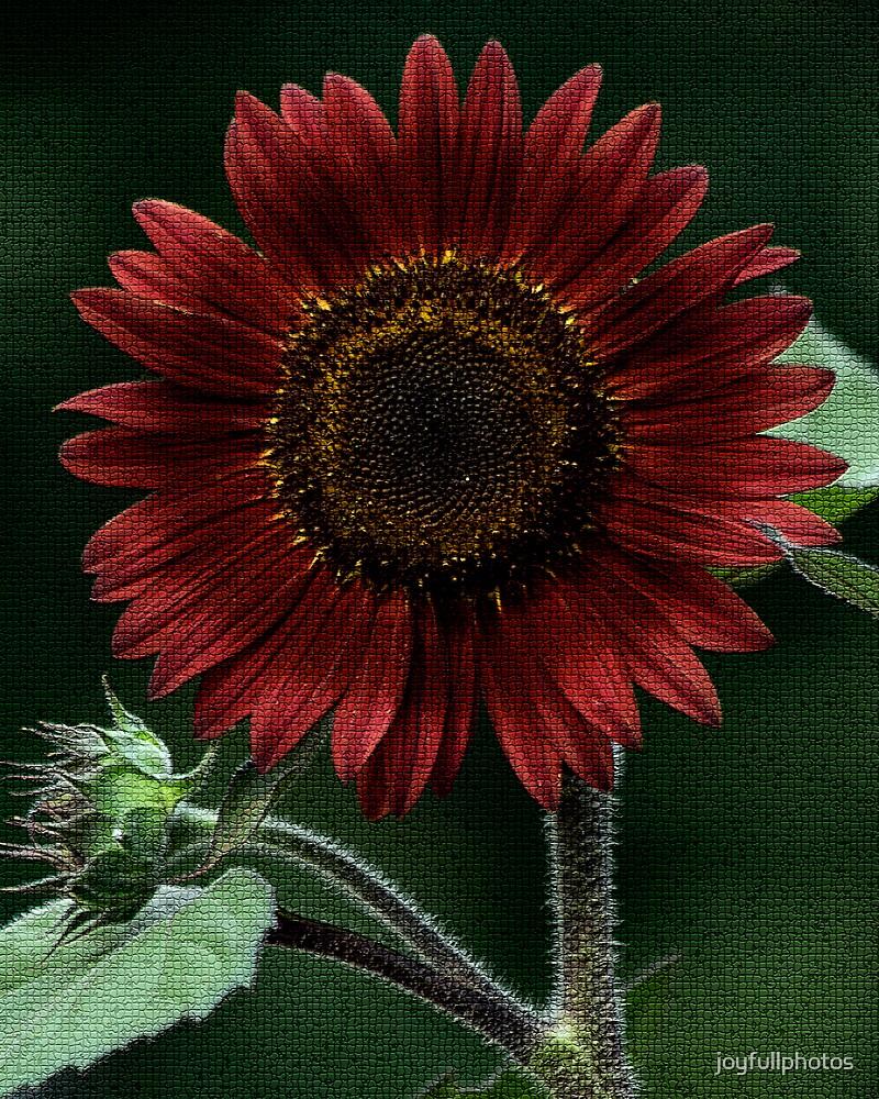 Red sunflower 2 by joyfullphotos