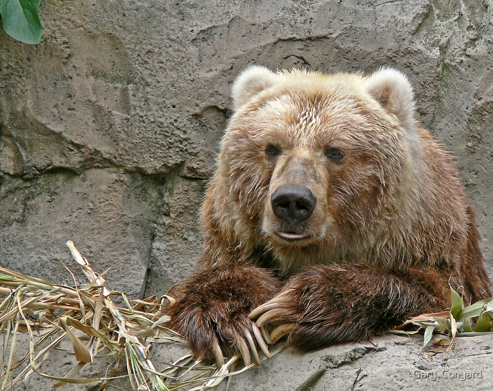 Bearly there by Gary  Conyard
