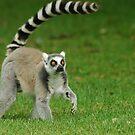 Lemur by KylieForster