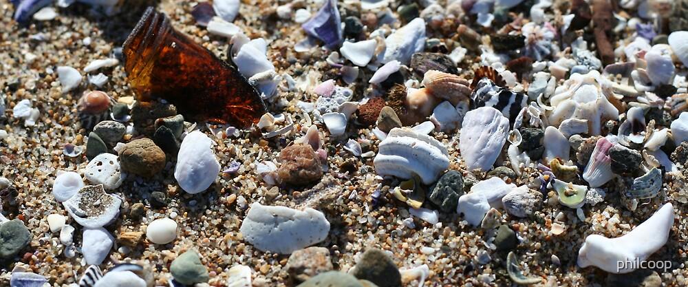 Sea Shells by philcoop