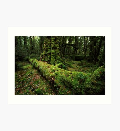 Fiordland forest - NZ Art Print