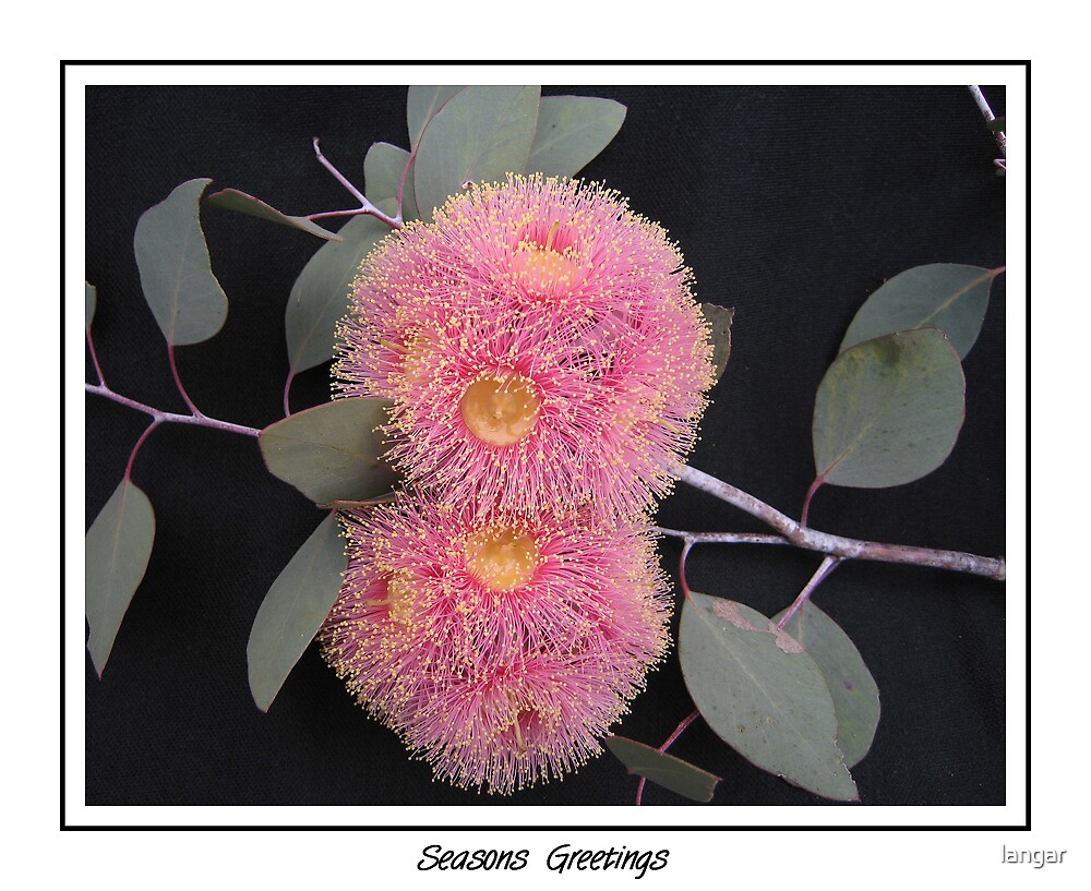 Card Flowering Gum by langar
