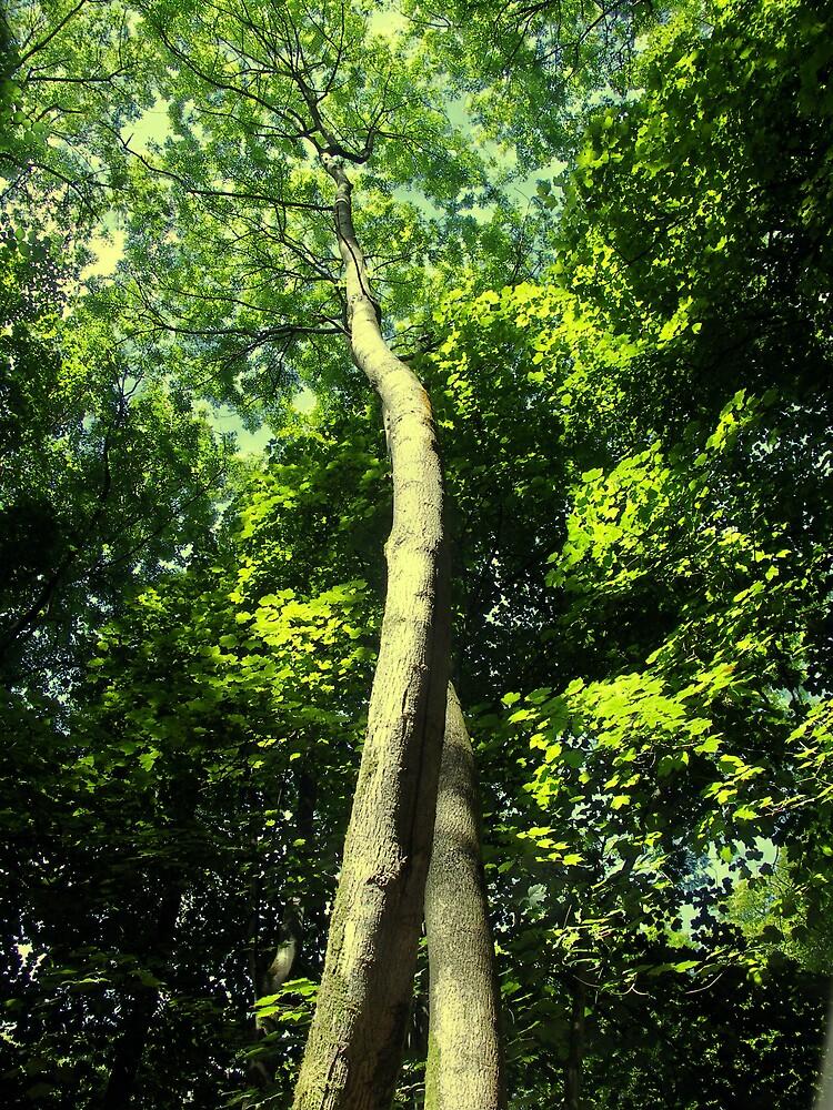 woodland by aidan