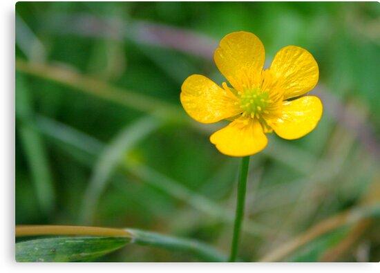 Shiny Little flower by JPsShots