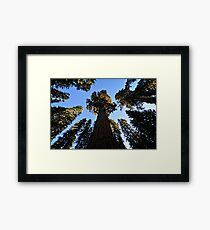 General Sherman Redwood Tree in Sequoia National Park in California Travel Trees Framed Print