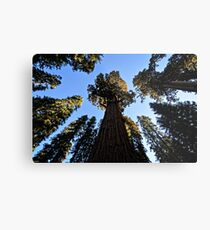 General Sherman Redwood Tree in Sequoia National Park in California Travel Trees Metal Print