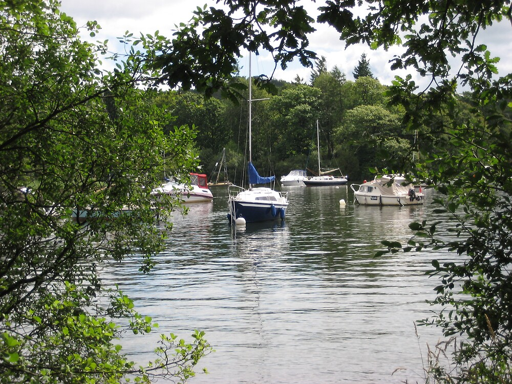 Lake Windermere  through the trees  by shelagh1312