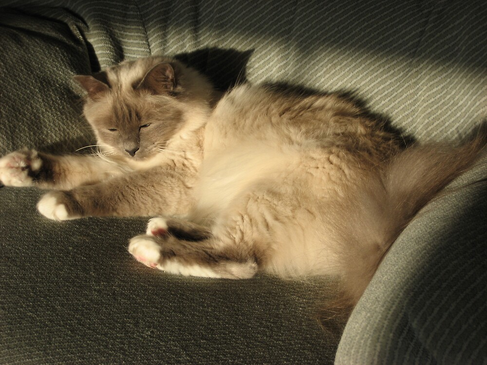 Pearl Birman in the sunshine  by shelagh1312