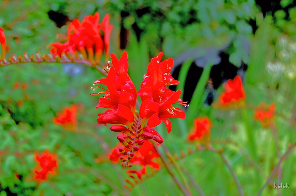Flowers by kelek