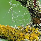 Moss And Dewdrops by relayer51
