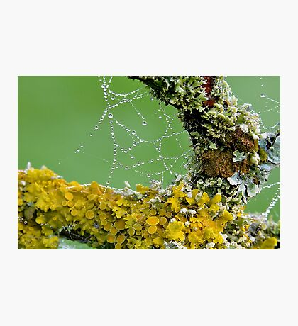 Moss And Dewdrops Photographic Print