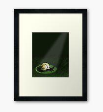 In the spotlight Framed Print