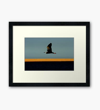 Bird # 8 Framed Print