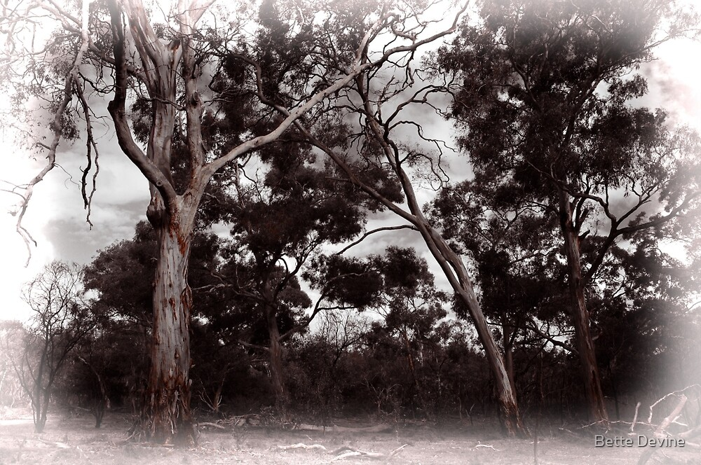Yellow Gums. by Bette Devine
