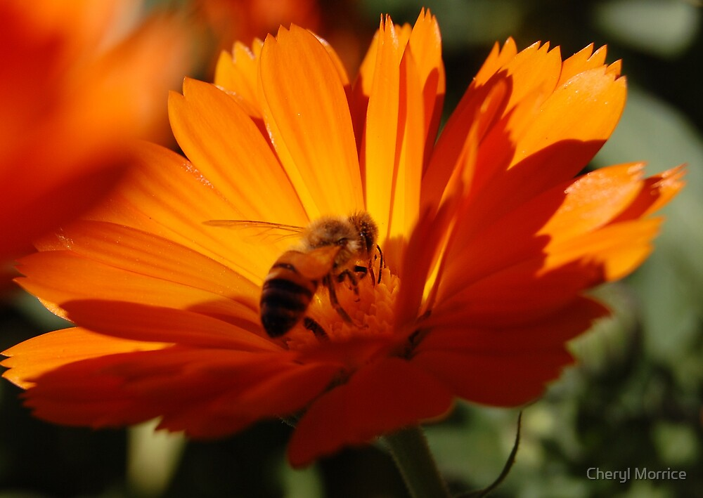 busy bee by Cheryl Morrice