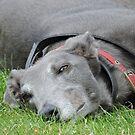 One Of Those Days: Greyhound by CreativeEm