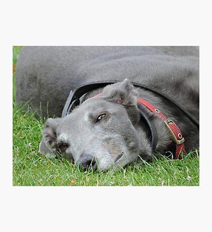 One Of Those Days: Greyhound Photographic Print