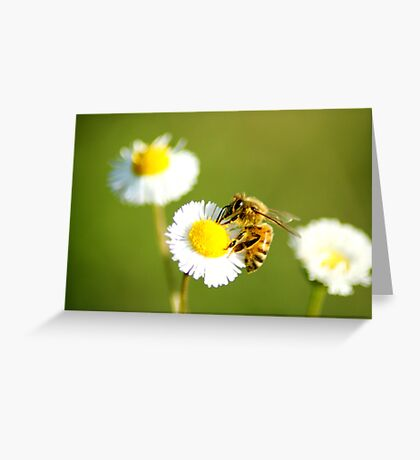 Lone Bee Greeting Card