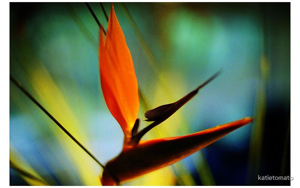 Bird of Paradise by katietomato