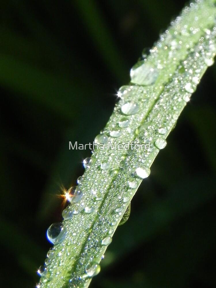 Sparkling Rain Drops by Martha Medford
