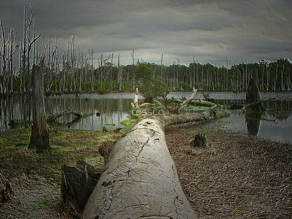 The Dead Forest by rossco