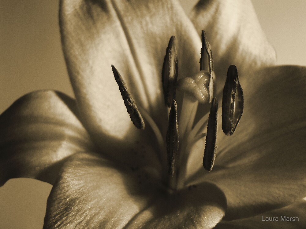 Lilly in sepia by Laura Marsh