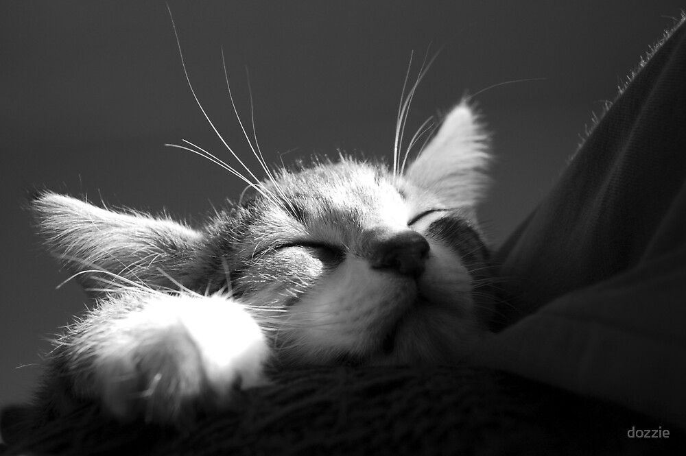 Kitten Sleeping BW by dozzie