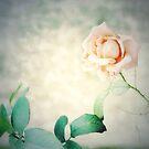 a rose in my heart by JOSEPHMAZZUCCO