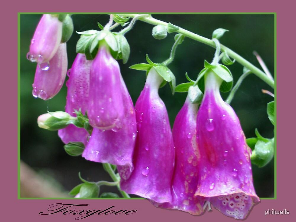 foxglove by philwells