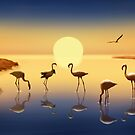 Flamingos in der Abendsonne - Flamingos in the evening sun by Monika Juengling