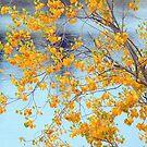 Autumn leaves by helmutk