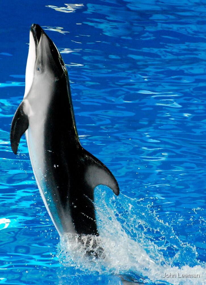 Dolphin by John Leeman