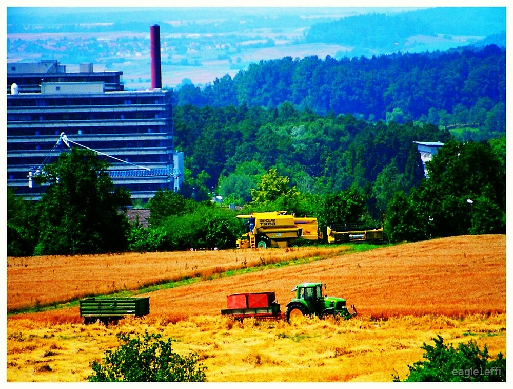 harvest in July 2007 by eagle1effi