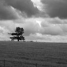 All Alone - Black & White by Danita Hickson