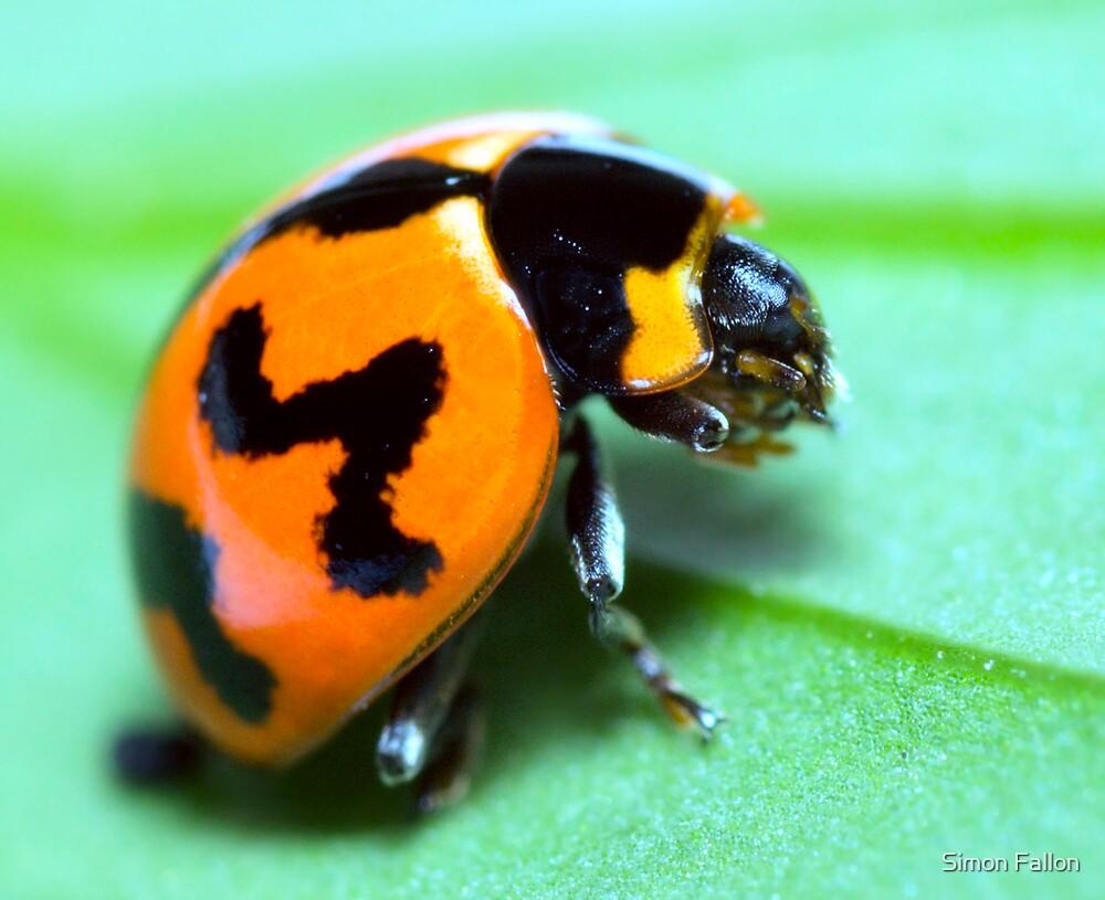Ladybird Grooming by Simon Fallon