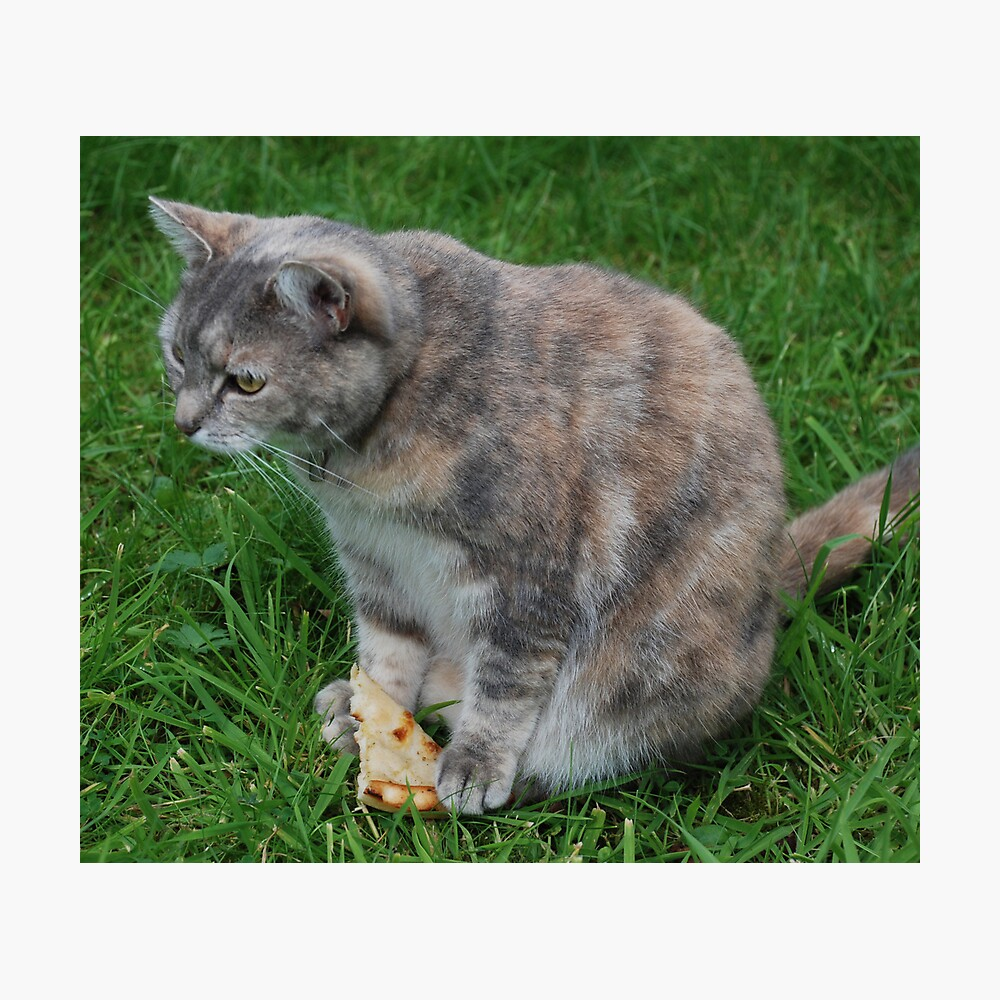 Princess and the Pizza! Photographic Print