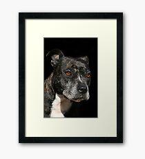Staffordshire Bull Terrier Portrait Framed Print