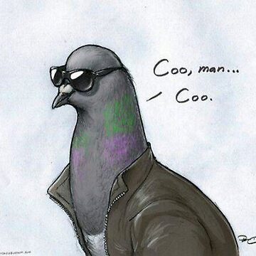 Coo' Man, Coo' Pigeon  by JakiTheRed