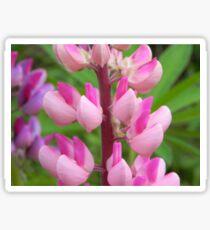 Pink Lupin Sticker