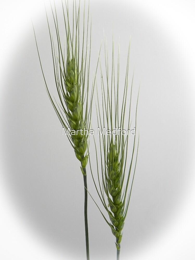 Canada Wild Rye Grass by Martha Medford
