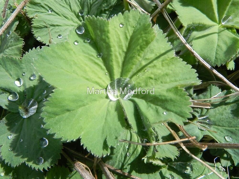 Rain Drop on Green Leaf by Martha Medford