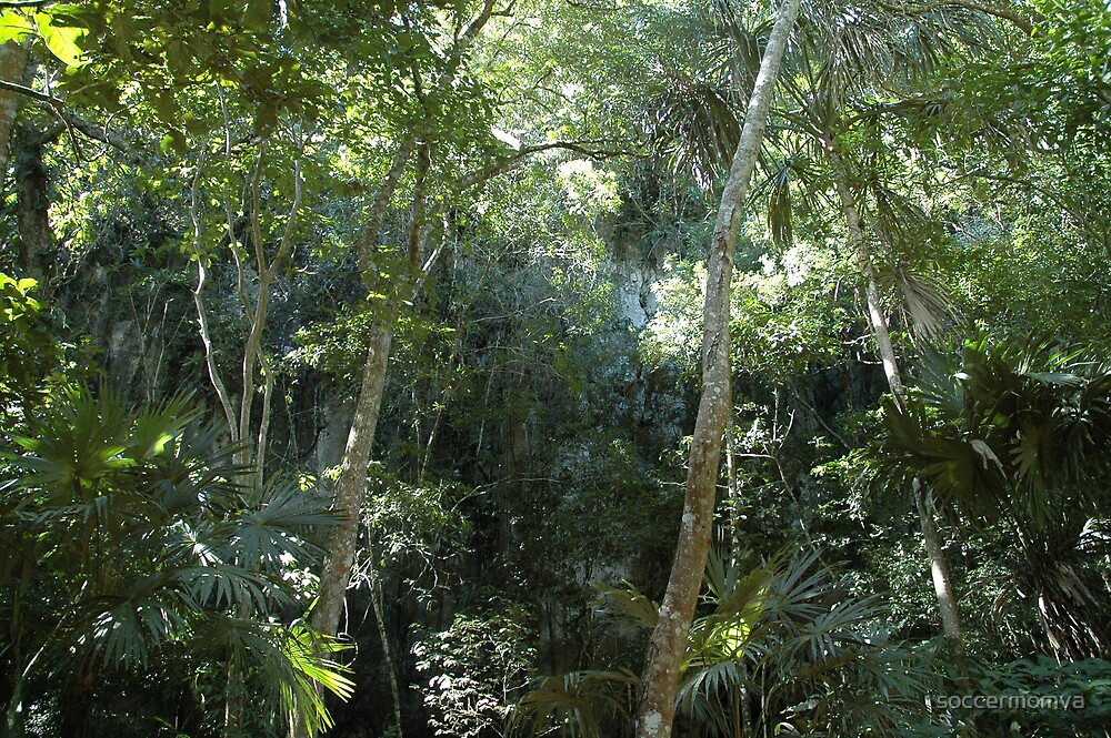 Belize Jungle by soccermomva