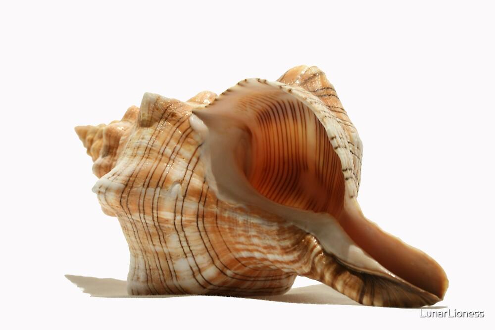 Shell by LunarLioness