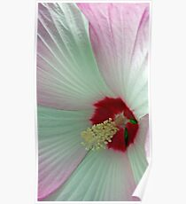 Pink And White Hibiscus Flower Macro Poster